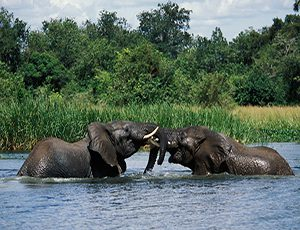 8 Days Uganda Adventure Safari