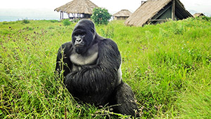 Virunga National Park - DR Congo