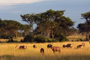 Queen_Elizabeth_National_Park_005